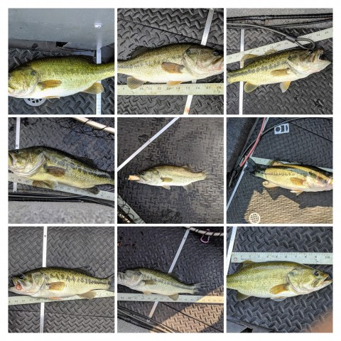 July Bass COLLAGE.jpg